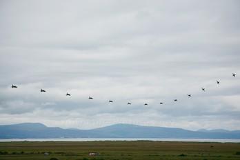 - - Royal Air Force British Aerospace Hawk T.1W