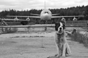 CCCP-86003 - Aeroflot Ilyushin Il-86 aircraft
