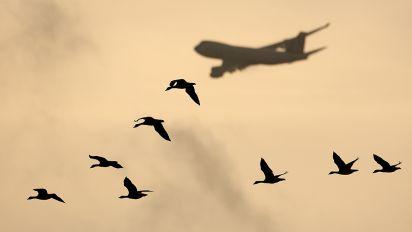 - - Jade Cargo Boeing 747-400F, ERF