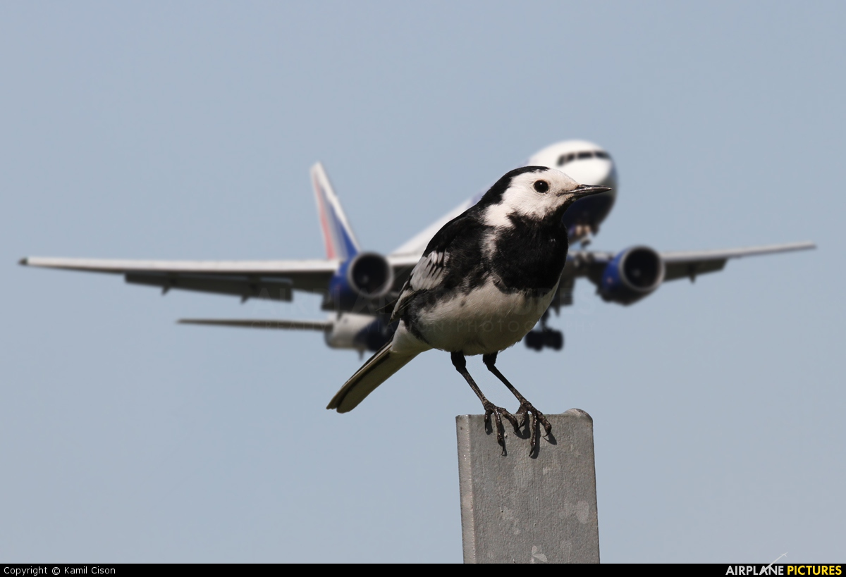 Transaero Airlines EI-UNC aircraft at London - Heathrow