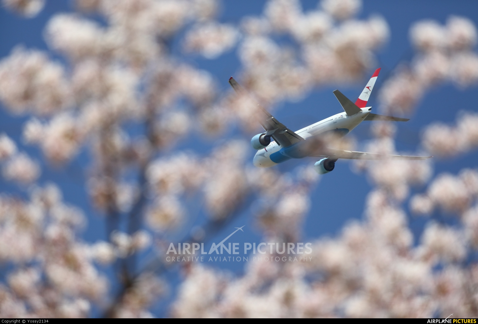 Austrian Airlines/Arrows/Tyrolean OE-LPD aircraft at Tokyo - Narita Intl