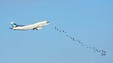 Planes & Birds