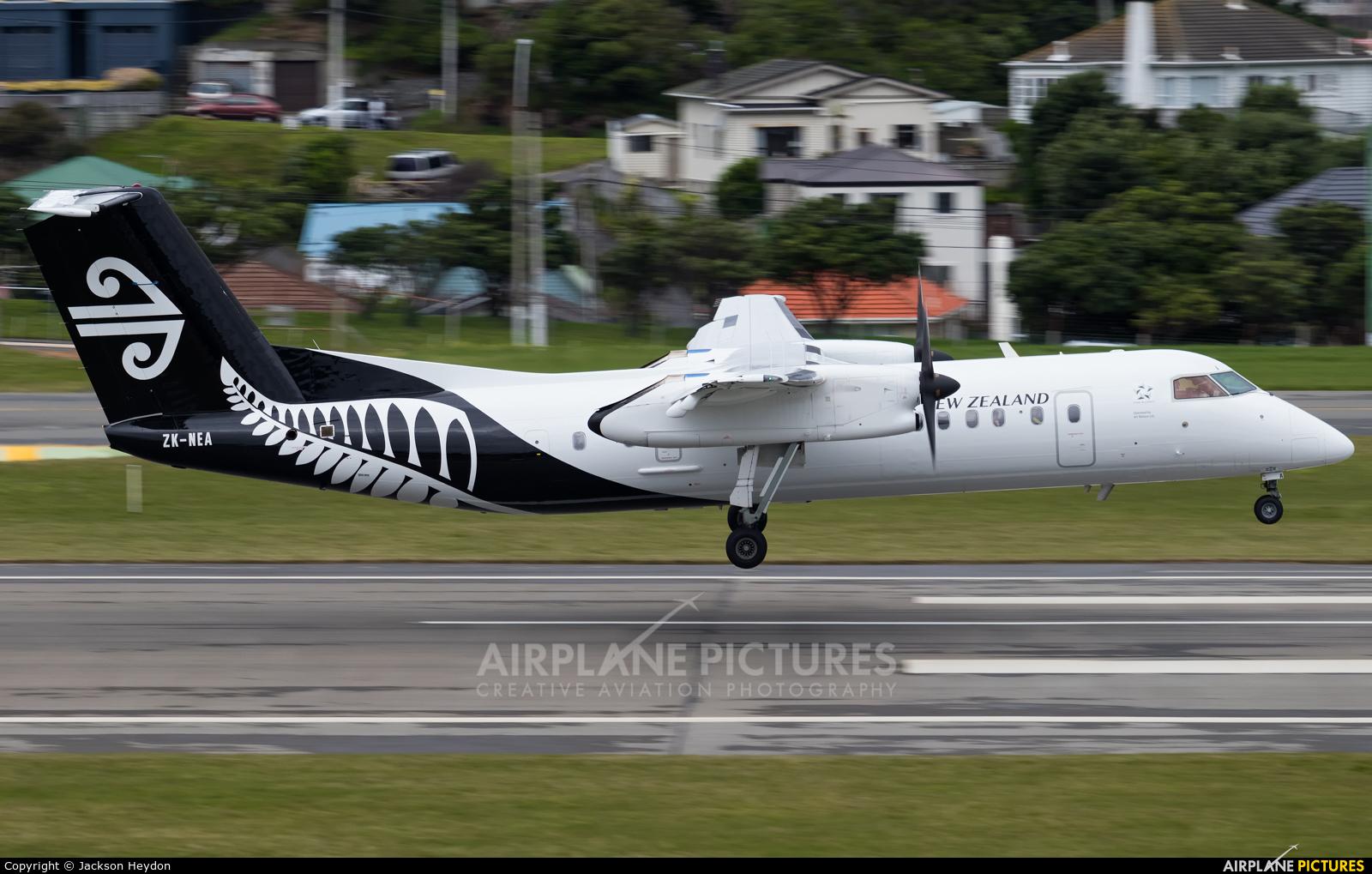 ZK-NEA aircraft at Wellington Intl