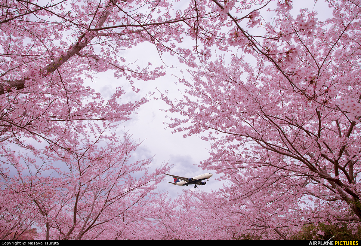 Delta Air Lines N804NW aircraft at Tokyo - Narita Intl