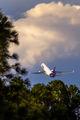 N610FE - FedEx Federal Express McDonnell Douglas MD-11F aircraft