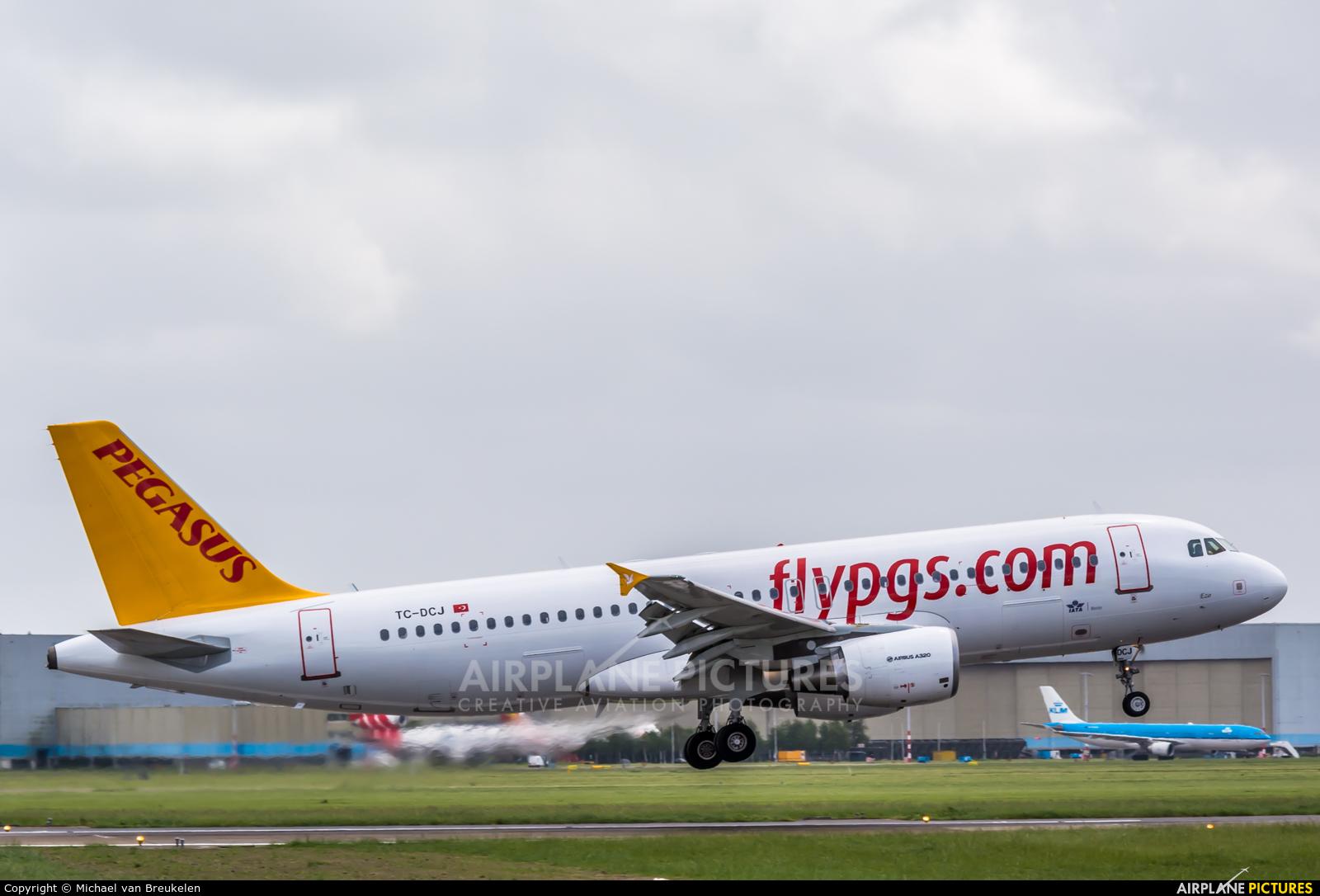 Pegasus TC-DCJ aircraft at Amsterdam - Schiphol