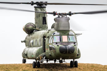 D-667 - Netherlands - Air Force Boeing CH-47D Chinook