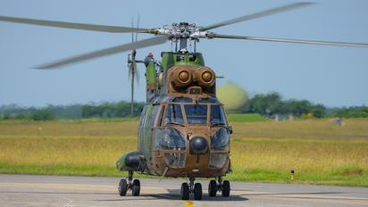 1244 - France - Army Aerospatiale SA-330 Puma
