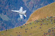 J-5007 - Switzerland - Air Force McDonnell Douglas F/A-18C Hornet aircraft