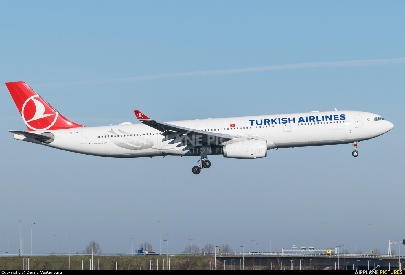 Turkish Airlines TC-LOF aircraft at Amsterdam - Schiphol