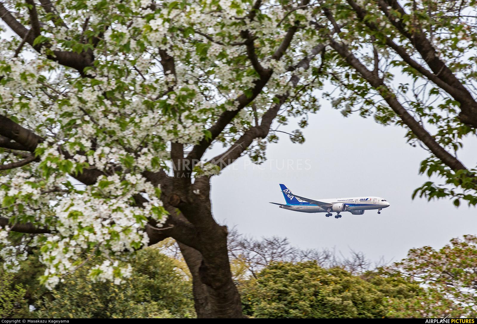 ANA - All Nippon Airways JA831A aircraft at Tokyo - Haneda Intl