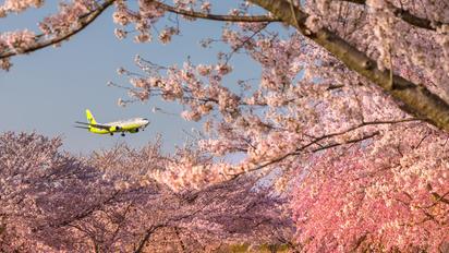 HL7556 - Jin Air Boeing 737-800
