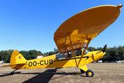 OO-CUB -  Piper L-21B Super Cub aircraft