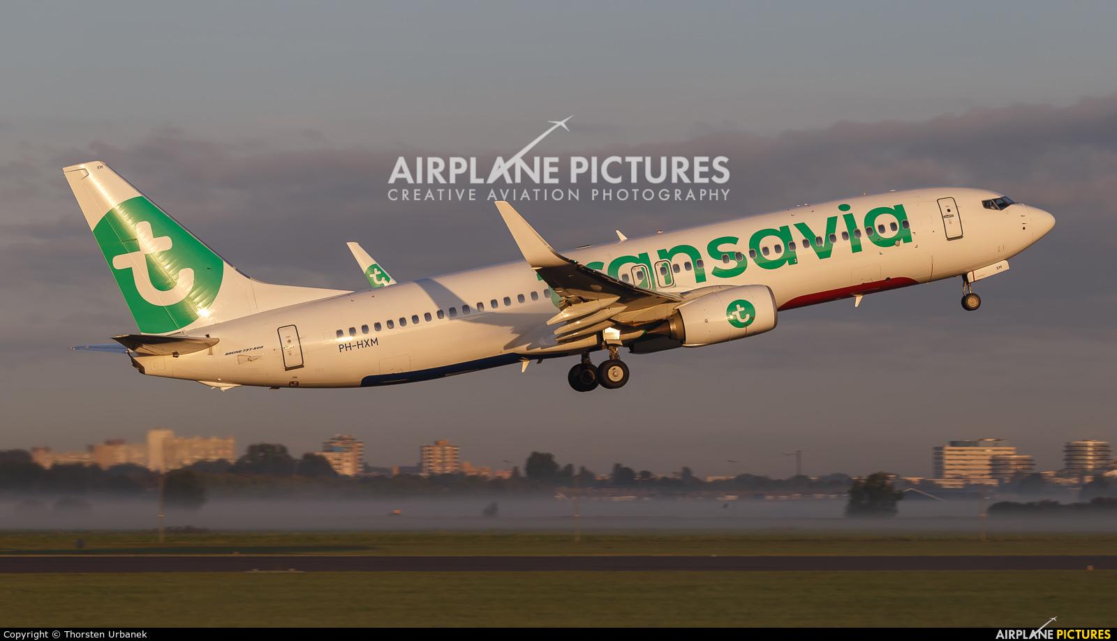 Transavia PH-HXM aircraft at Amsterdam - Schiphol