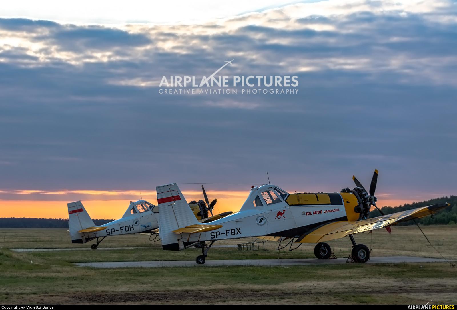 Aerogryf SP-FBX aircraft at Toruń