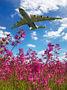 Antonov Airlines /  Design Bureau UR-82060